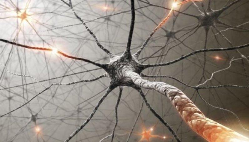 İnsan Deri Hücreleri Motor Nöronlara Dönüştürülüyor